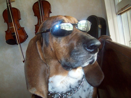 Violin Impresario Nigel The Bloodhound Kennedy