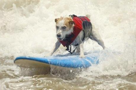 The waters breaking, even I didn't expect the Jack Russell!